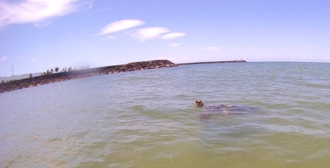 I only managed to capture a pic of ONE turtle in Haleiwa. Note for next time: bring a strap for the GoPro