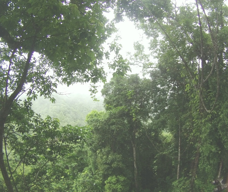 More dense forest! Watch out its super slippery when its raining