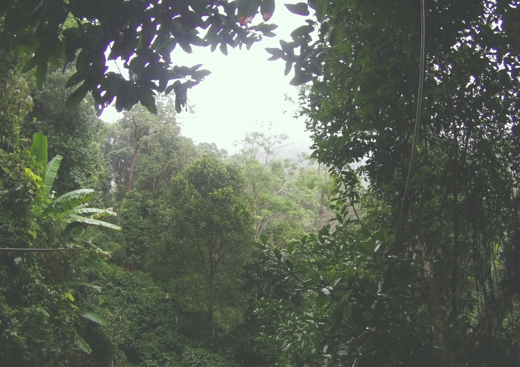 View of the jungles of Chiang Mai while zip lining!