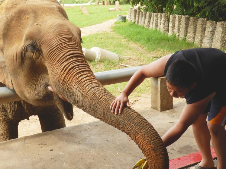 Jon giving this elephant his banana