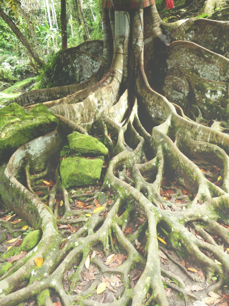 Tree roots in Goa Gajah